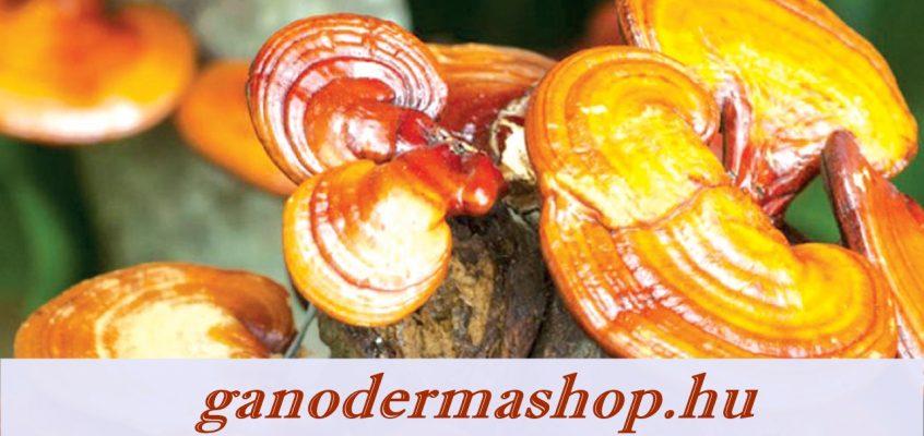 A Ganoderma Hatása, Mi a ganoderma gyógygomba 3 titka?