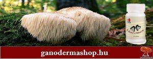 Oroszlánsörény gomba tabletta (süngomba)