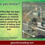 Algák segítettek Csernobilban a sugárfertőzötteknek