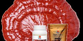ganoderma egészséges kávé ganoderma por GL RG