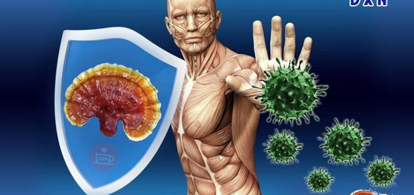 DXN Immunerősítő gyógygomba immunerősítő hatás